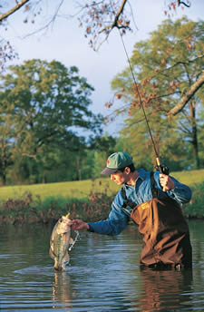 Mississippi Game  Fish on Mississippi Fishing And Fishing Maps Including River Maps  Lake Maps
